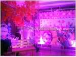 Girl Baby Photo Backdrop Decoration